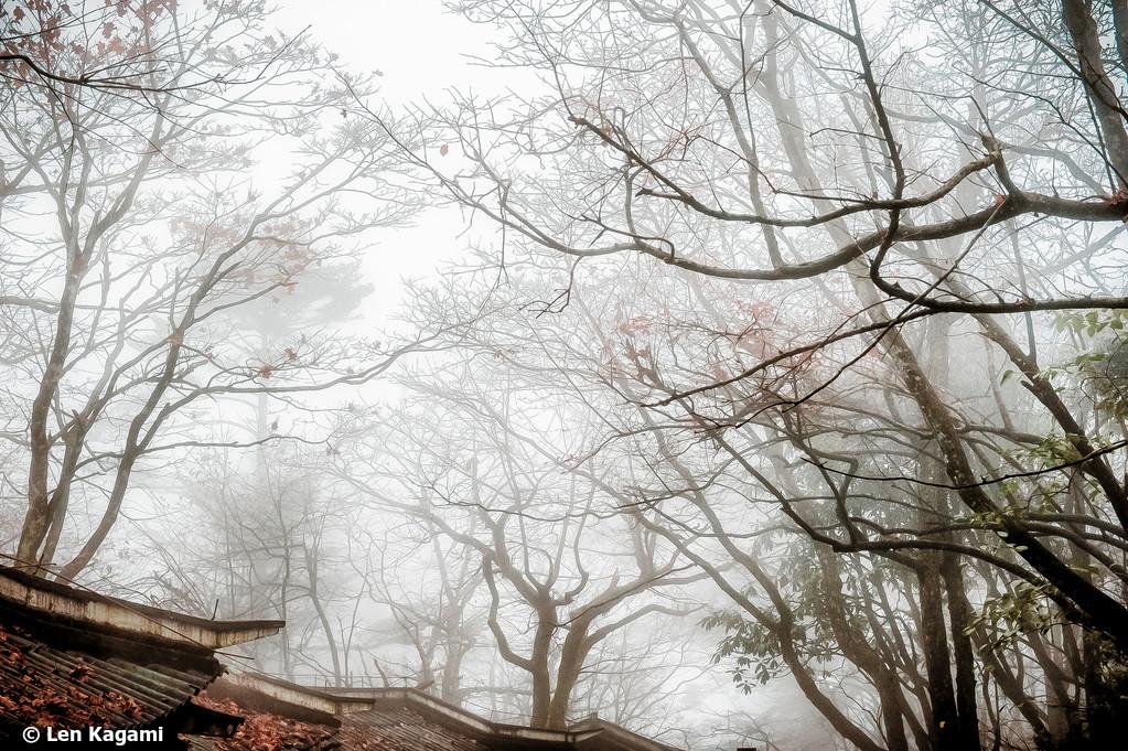 Fog on Mount Emei