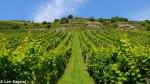 Bacharach vineyards