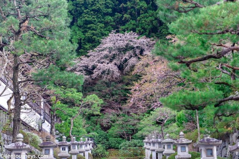 Spring in Kōyasan