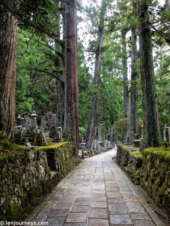 Winding path lined with centuries-old cedar trees