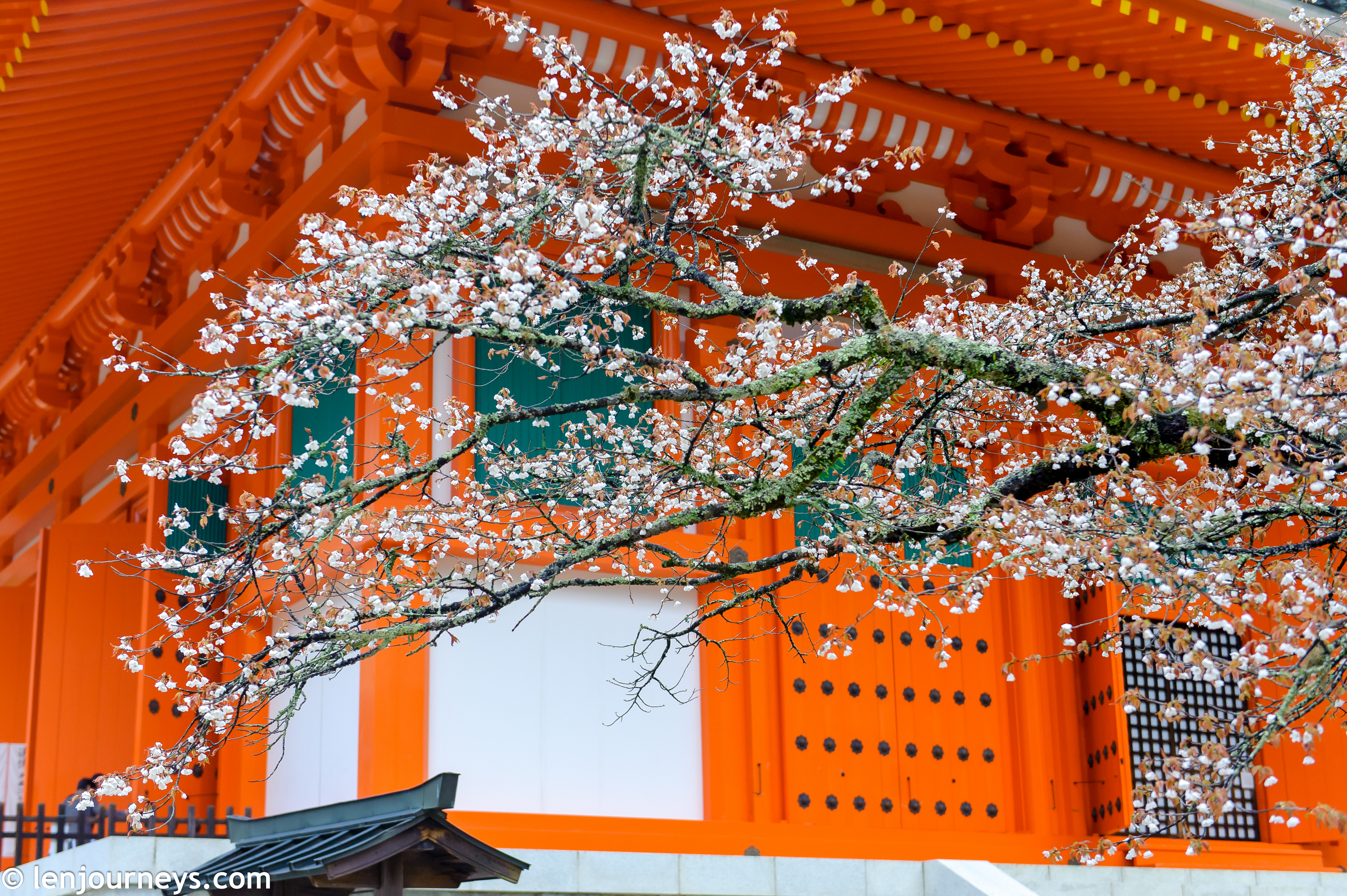 Cherry blossoms at Daito Pagoda