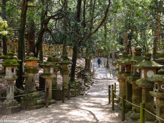 The stone lanterns of Kasuga Taisha