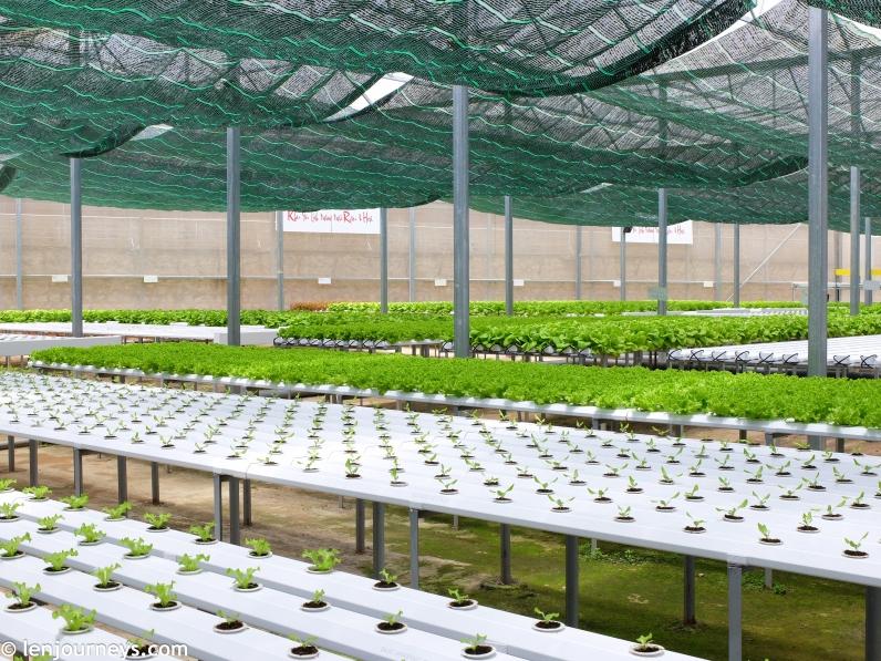 Cultivation area