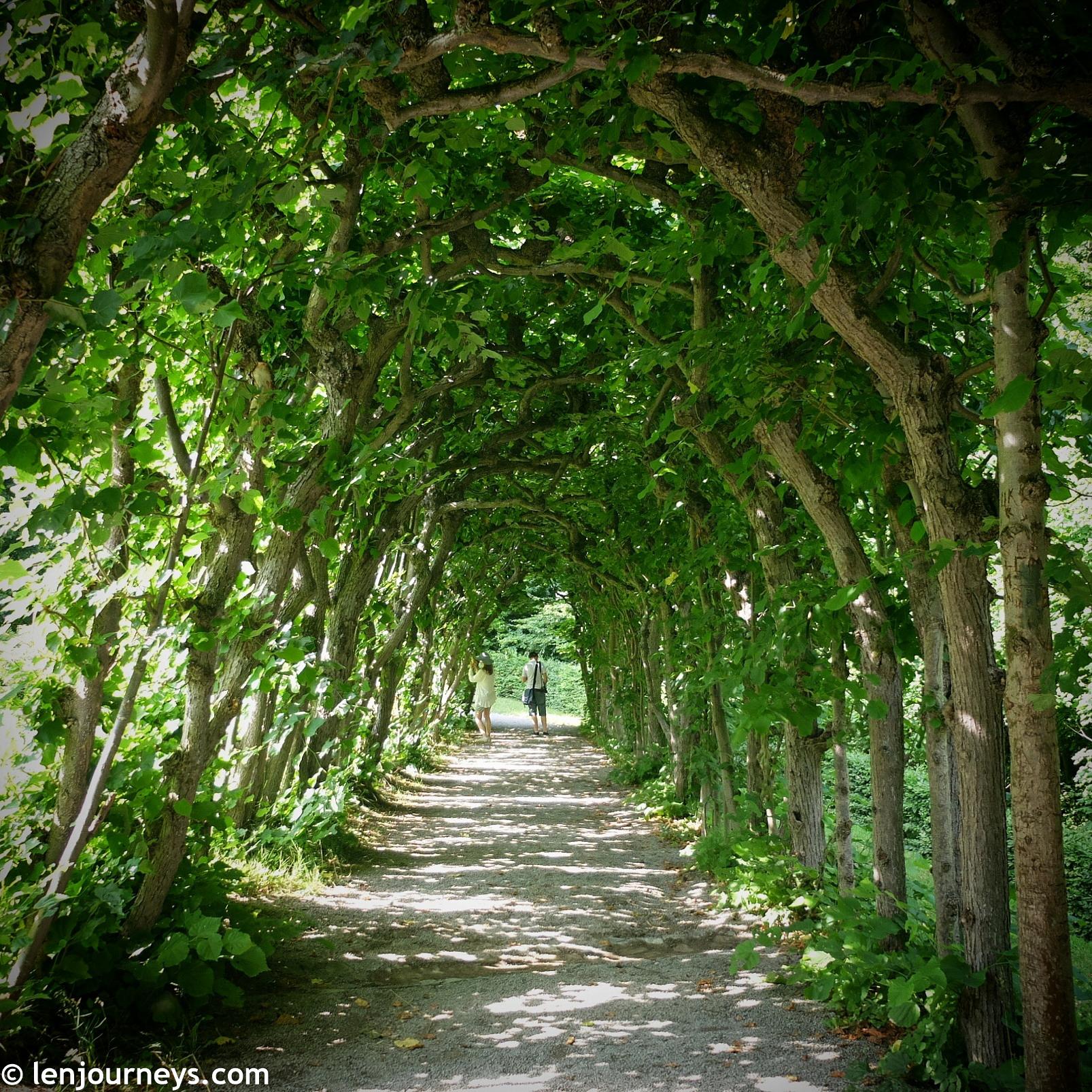 Beautiful tree tunnel in Bergpark Wilhelmshöhe