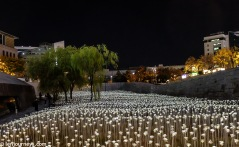 The field of LED roses
