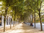 Lime trees in Jardin du Palais Royal